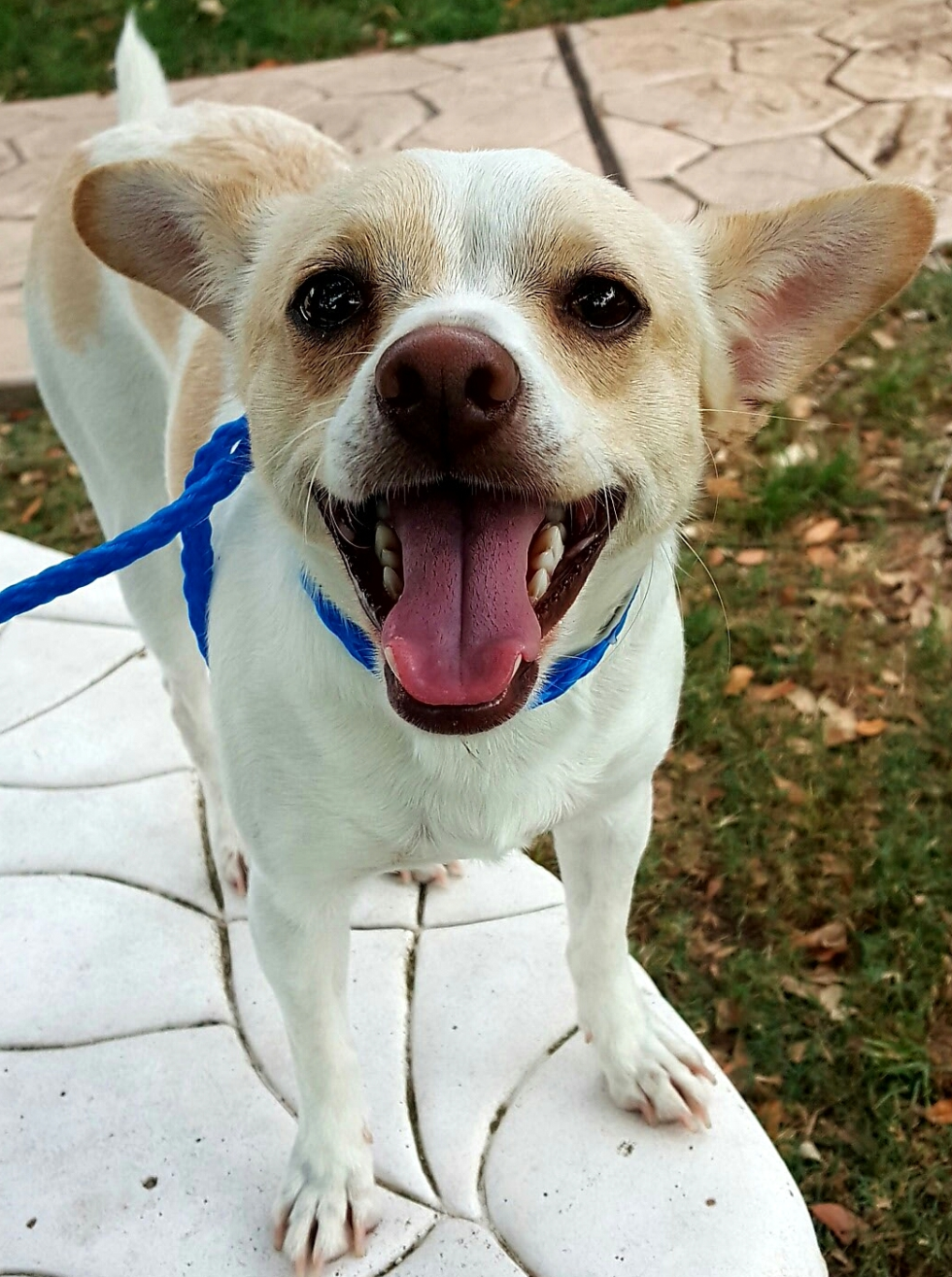 Houston, Pethouse Pet of the week, June 2, 2017, Snow