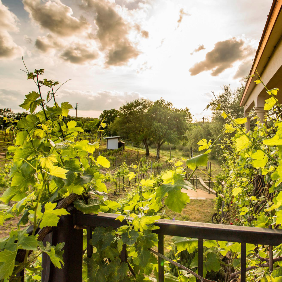 The Vineyard B&B at Lost Creek Ranch