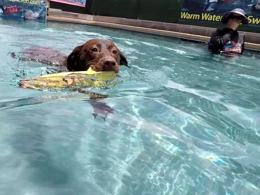 Houston, Rummy's Beach Club, August 2017, swimming dog