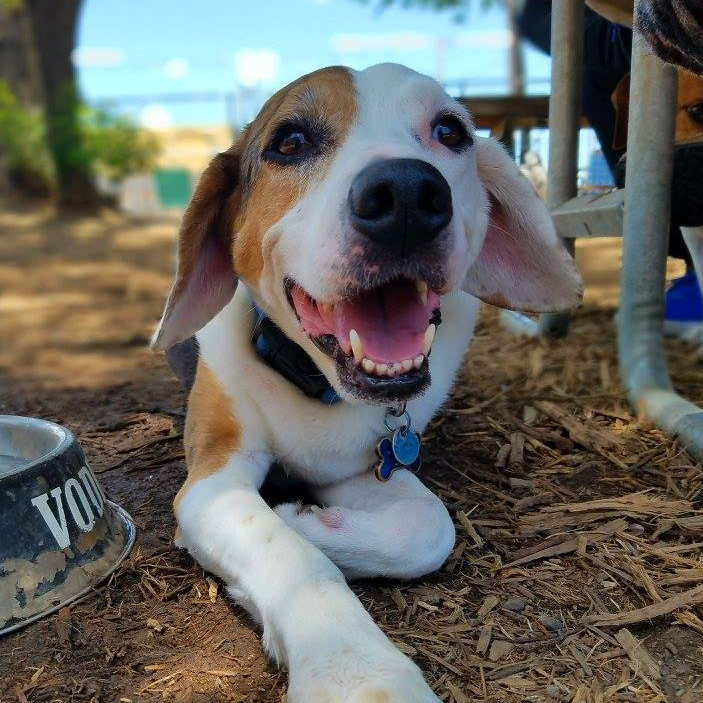 Yard Bar Austin patio dog puppy