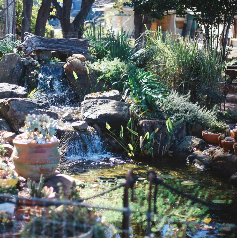 Cosmic Coffee + Beer Garden pond