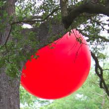 News_red ball_Menil