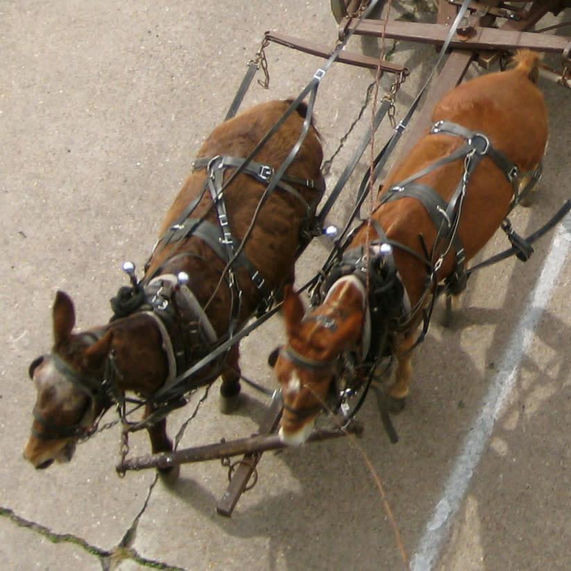 News_RodeoHouston_Trail riders_Memorial Park
