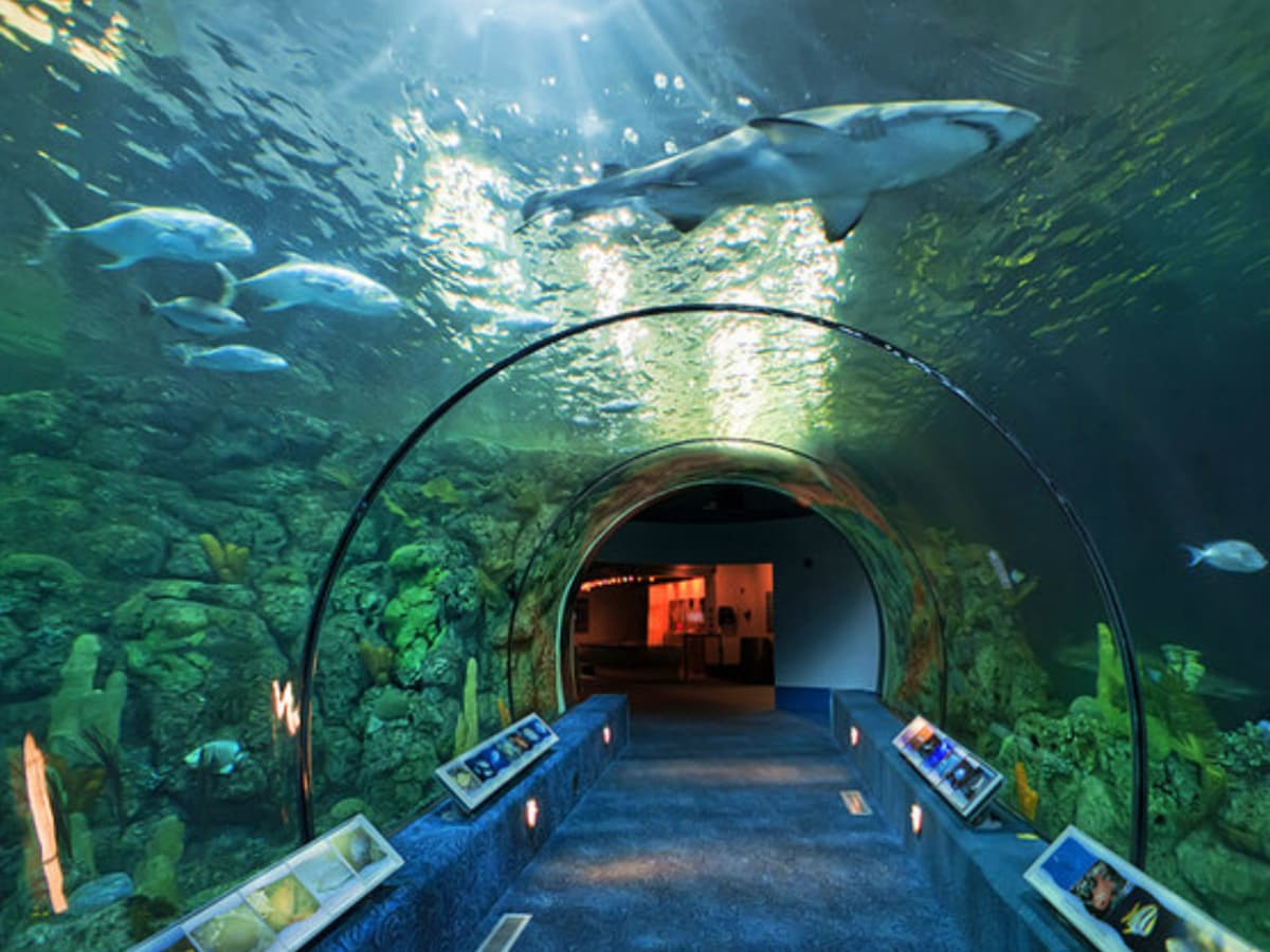 Make the most out of Shark Week with scary exhibits, crazy ...