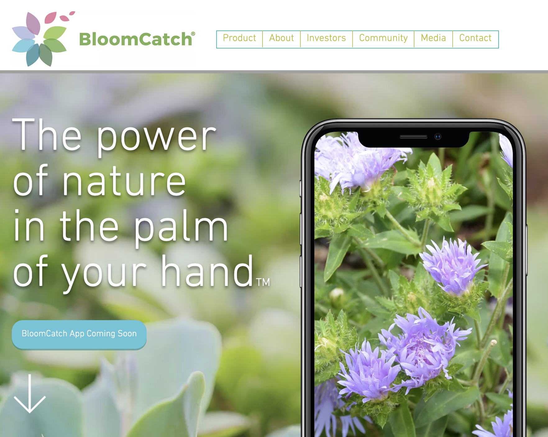 BloomCatch