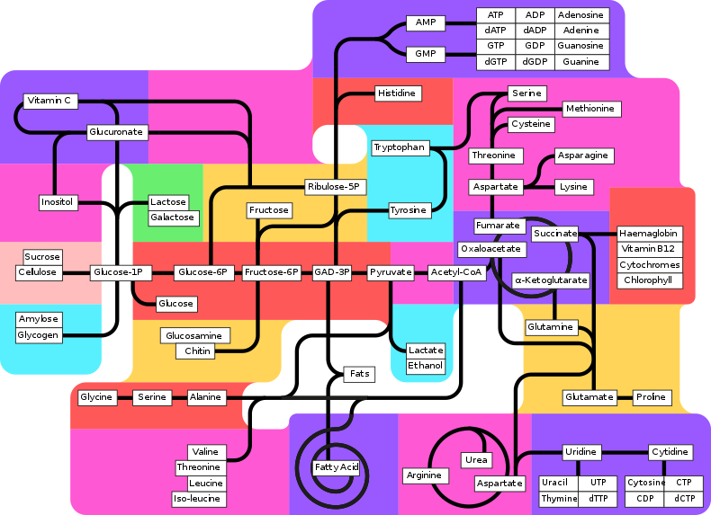 Metabolism_pathways_(partly_labeled).svg