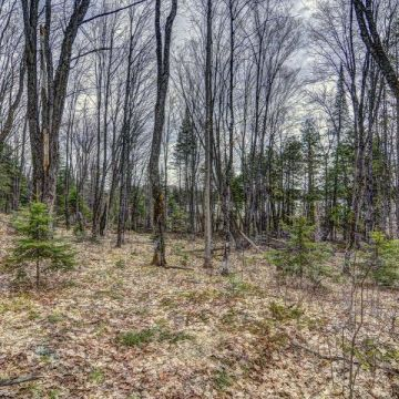 Little Presque Isle Lake Lot 6