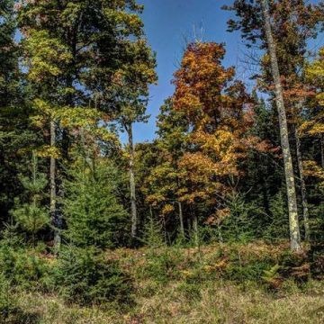 Clear Lake Acreage Parcel 8