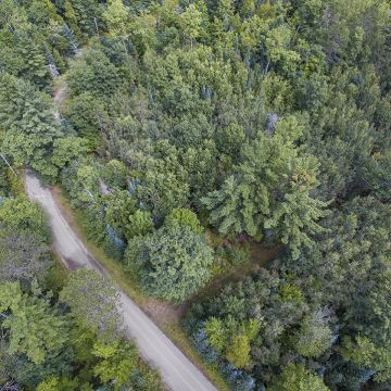 Scotchman Lake Rd. Acreage 6