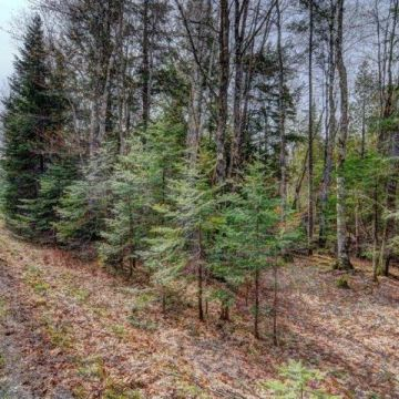 5 Acre Lot with Access to 3 Lake Chain in Presque Isle 5