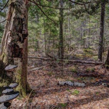 5 Acre Lot with Access to 3 Lake Chain in Presque Isle 6