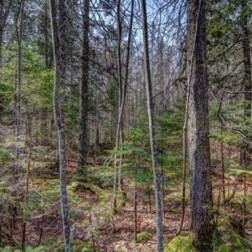 5 Acre Lot with Access to 3 Lake Chain in Presque Isle 8