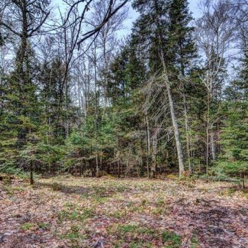 5 Acre Lot with Access to 3 Lake Chain in Presque Isle 10