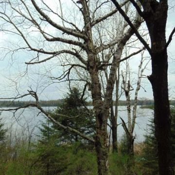 Twin Island Lake Lot 2