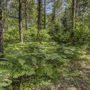 Carefree Acres Lot #11 5