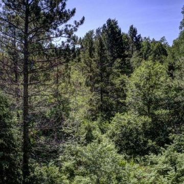 Carefree Acres Lot #11 13