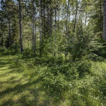 Carefree Acres Lot #15 2