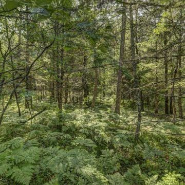 Carefree Acres Lot #15 6