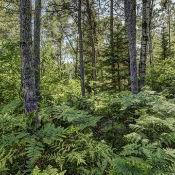 Carefree Acres Lot #15 7
