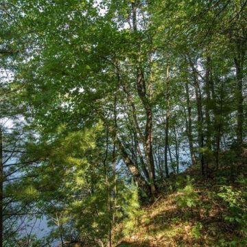 6447 Goose Road, Lake Tomahawk 3
