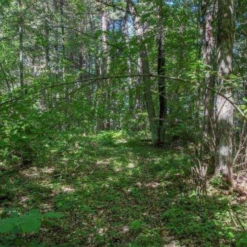 6447 Goose Road, Lake Tomahawk 8