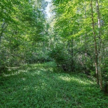 6447 Goose Road, Lake Tomahawk 12