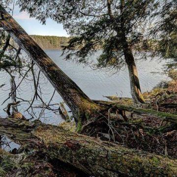 Timber Wolf Road Lot 30 on Beaver Lake, Presque Isle 5