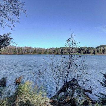 Timber Wolf Road Lot 30 on Beaver Lake, Presque Isle 6