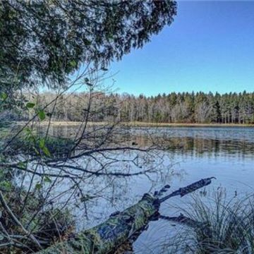 Timber Wolf Road Lot 31 on Beaver Lake, Presque Isle 4