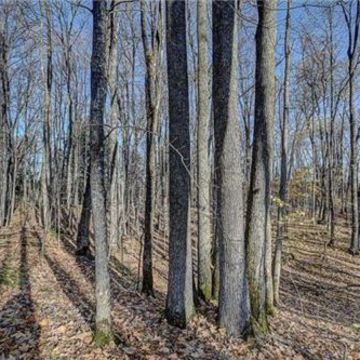 Timber Wolf Road Lot 31 on Beaver Lake, Presque Isle 5