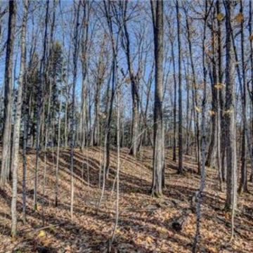 Timber Wolf Road Lot 31 on Beaver Lake, Presque Isle 6
