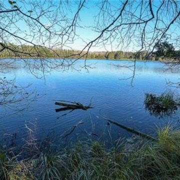Timber Wolf Road Lot 31 on Beaver Lake, Presque Isle 7