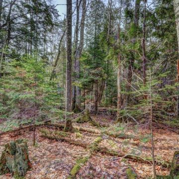 5 Acres on Blue Heron Road in Natural Lakes Private Preserve 4