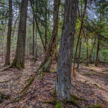 5 Acres on Blue Heron Road in Natural Lakes Private Preserve 5