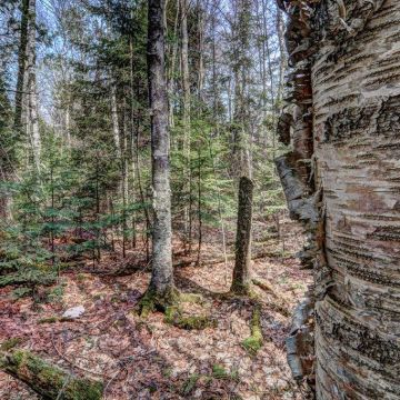 5 Acres on Blue Heron Road in Natural Lakes Private Preserve 6