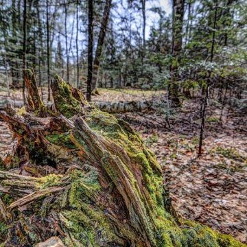 5 Acres on Blue Heron Road in Natural Lakes Private Preserve 7