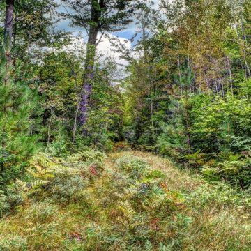 Parcel 4-On Scotchman Lake Road 1