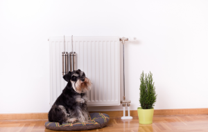 energy-saving tips blog image: little dog and plant sitting in front of a white heater