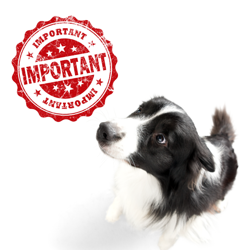 "assistance animals image: picture of a border collie looking updates and a red ""important"" stamp set against a white background"