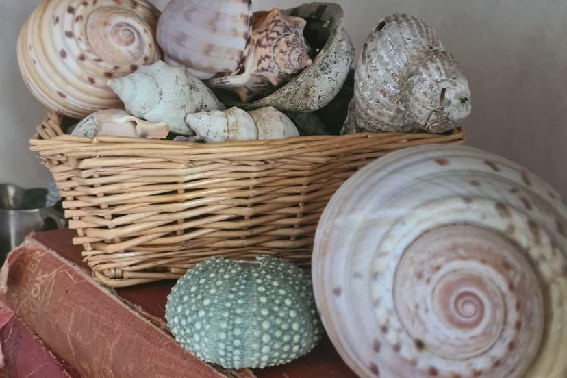 Assortment Of Large, Medium, and Small Shells