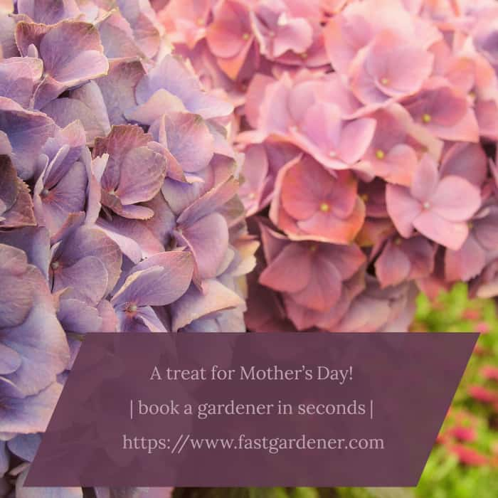 5 Mother's Day Gardening Gift Ideas