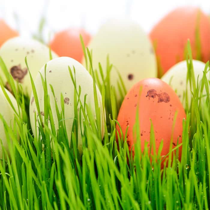 3 'Easter Eggs' For Your Garden