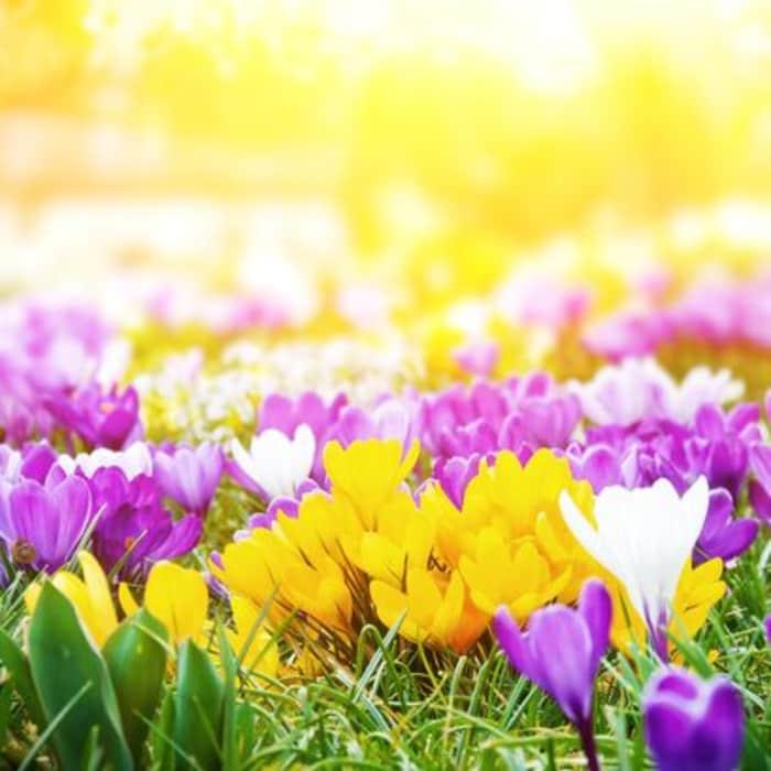 fastgardener's spring clean