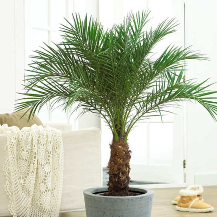 7 Pet Friendly, Air Purifying Plants