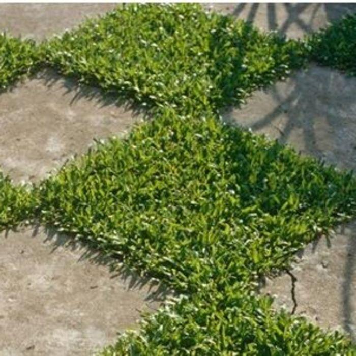 2 Ways to Maximise Garden Space