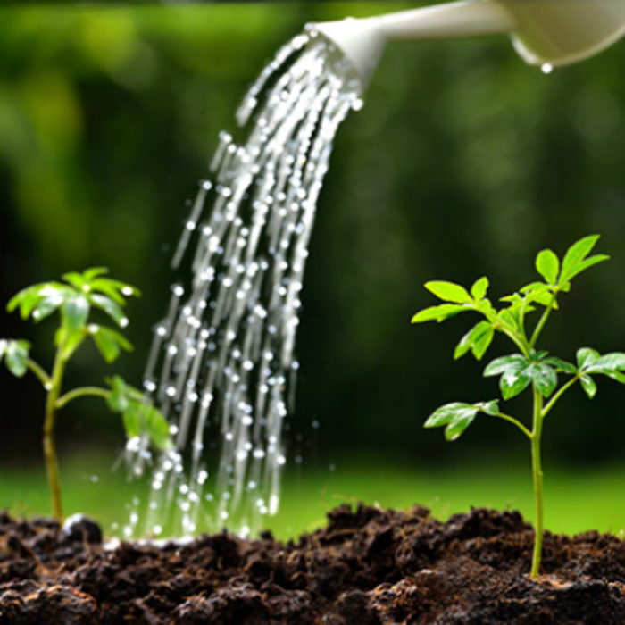 Improve Your Health with Garden Maintenance