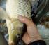 Cách phòng bệnh và chăm sóc cho cá khi chuyển mùa