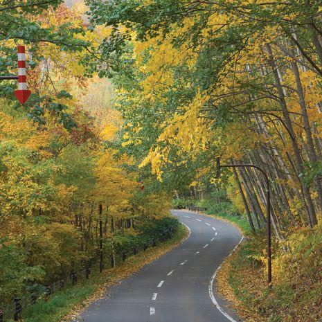 Foliage, Hokkaido, Japan
