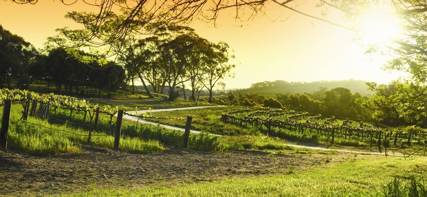 Vineyards, Barossa Valley