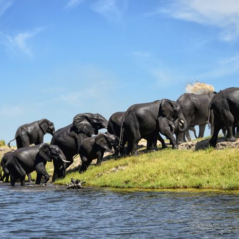 Elephants, Chobe National Park, Botswana